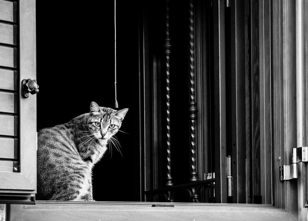 Cat on a window ledge, Catania